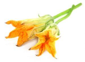 flor de ayote